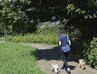 ペットホテル世田谷店 若林公園でのお散歩